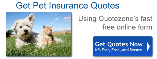 Pet insurance quotes compared